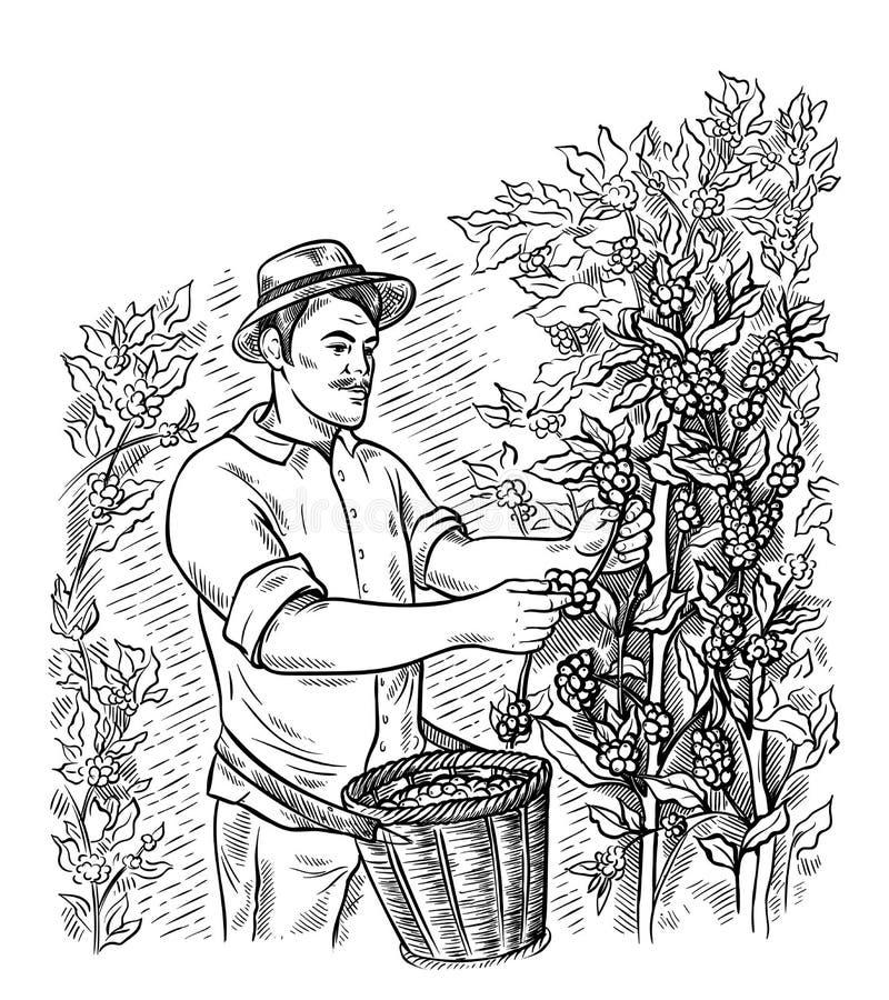 Le ramasseur d'homme moissonne le café au paysage de plantation de café dans le vecteur tiré par la main de style graphique illustration libre de droits