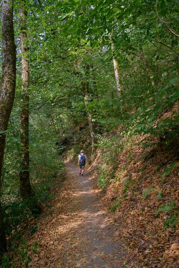 Le randonneur féminin solitaire voyage par la belle forêt images stock