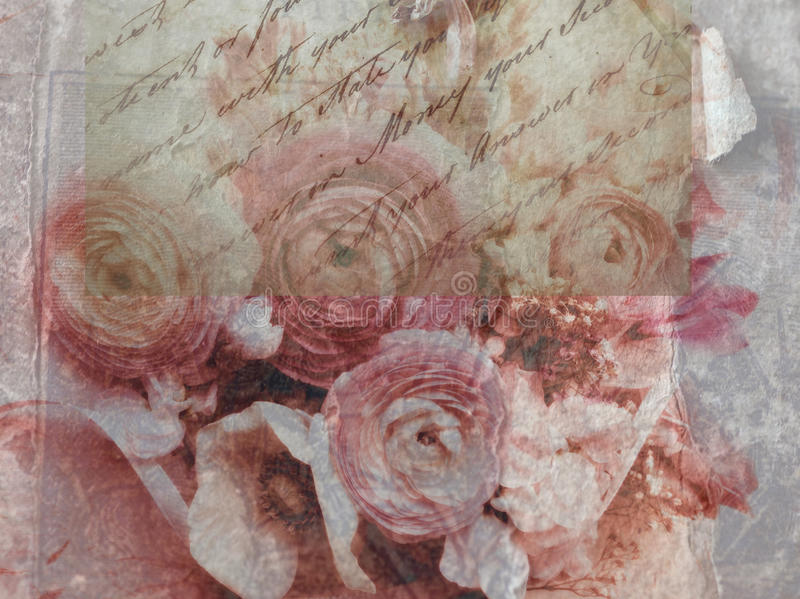 Le Ranunculus fleurit le grunge photographie stock libre de droits