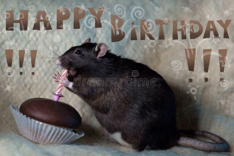Le rat célèbre son anniversaire et mange un gâteau image stock