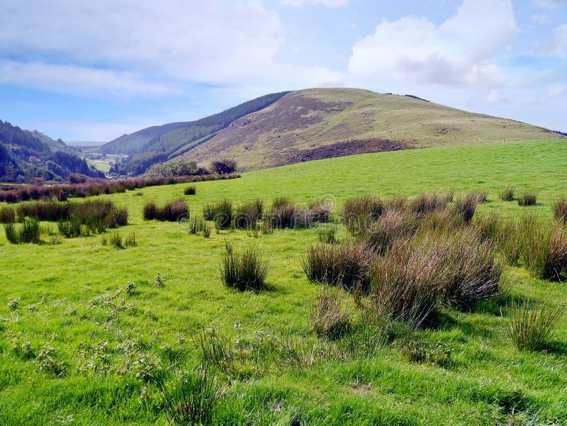 Le regard à bosseler est tombé à travers des touffes sur les champs herbeux photographie stock libre de droits