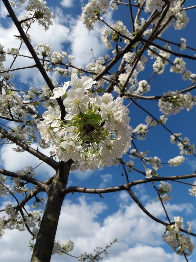 Le ressort est ici, des fleurs d'arbre photographie stock