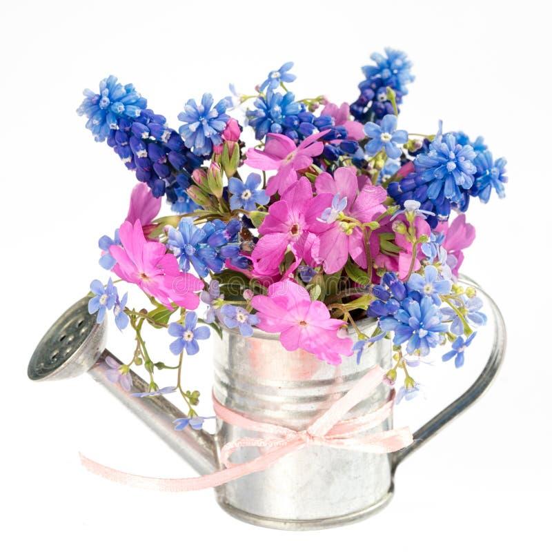Le ressort fleurit le bouquet dans la boîte d'arrosage de jardin images libres de droits