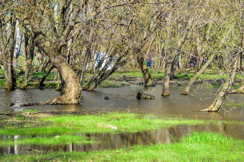 Le ressort a inondé des arbres avec les bourgeons de floraison dans le Kolomenskoye images libres de droits