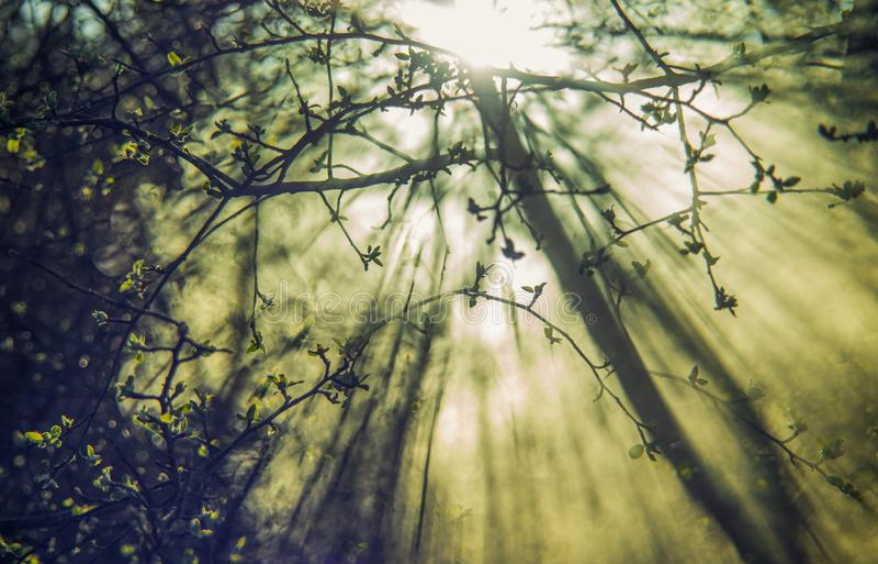 Le ressort laisse le soleil et la brume images stock