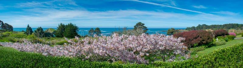 Le ressort se développe côte de Mendocino photo libre de droits