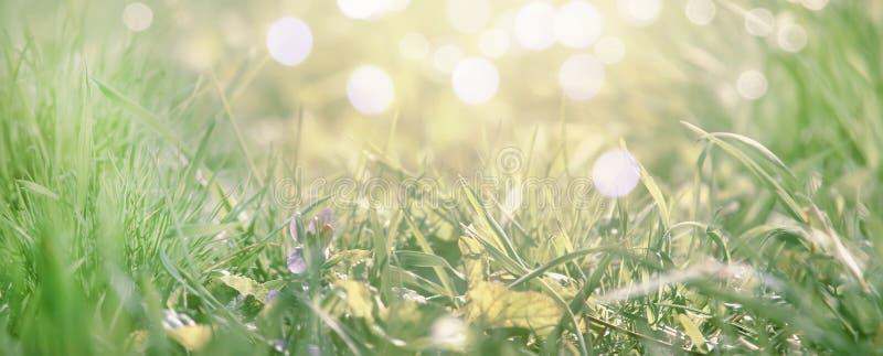 Le ressort vient, fond bleu-clair de frontière avec l'herbe et fleur de violette, endroit pour le texte, image modifiée la tonali image libre de droits
