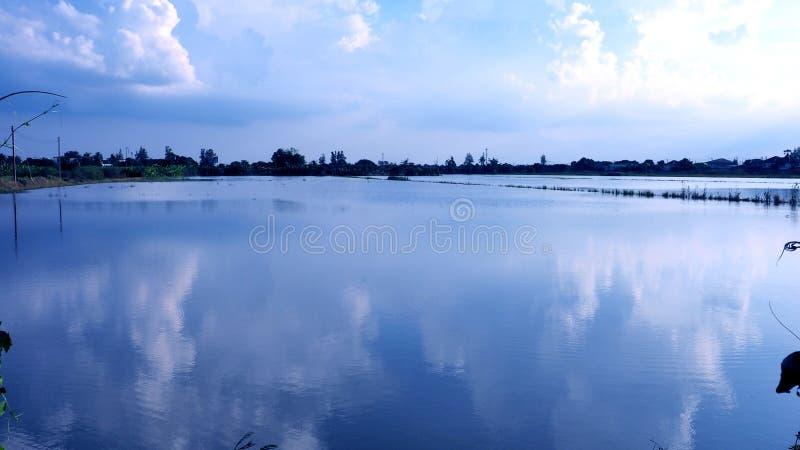 Le risaie dell'inondazione in Tailandia hanno reflec piacevole del cielo blu e della nuvola immagine stock