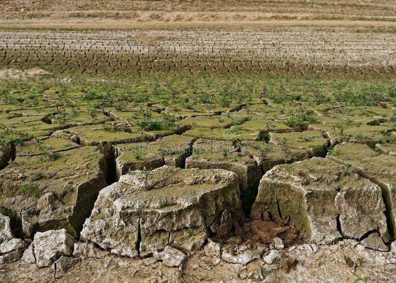 Le rivage d'une assèche, la terre a divisé en grandes banquises, de petites usines se sont développés, la sécheresse est claireme photo stock