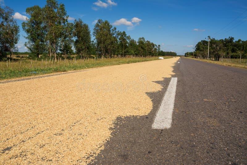 Le riz a écarté pour sécher sur l'asphalte au Cuba photo stock