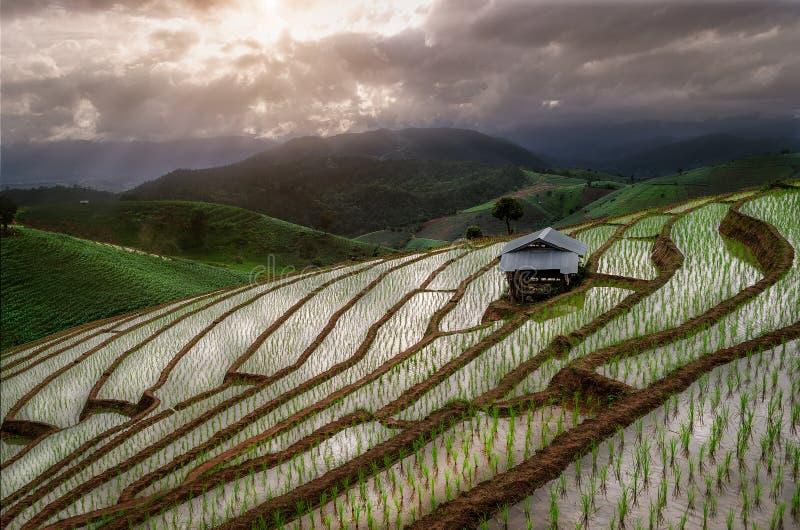 Le riz d'étape met en place chez Mae Klang Luang, Chiangmai, Thaïlande photos stock