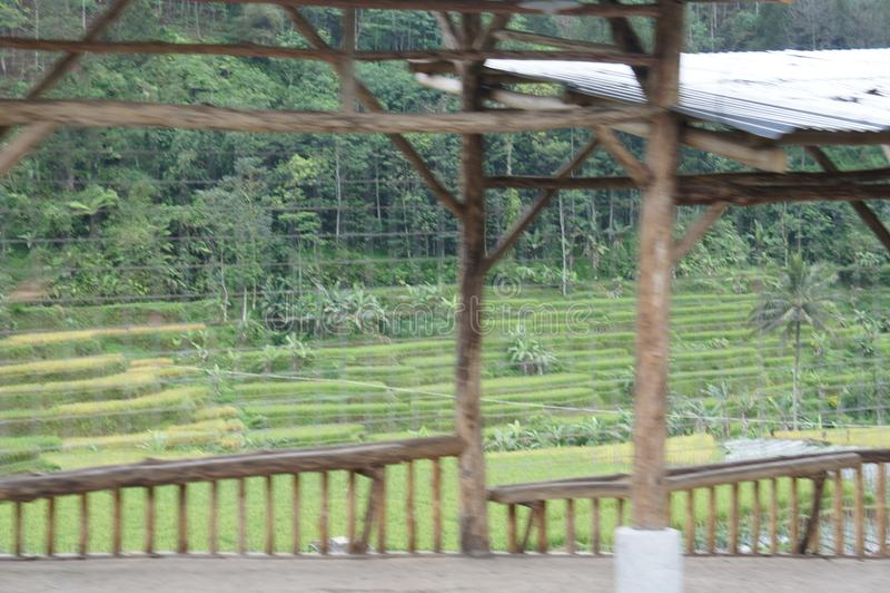Gisements De Riz De Terrasse Sur Java Indonésie Image Stock