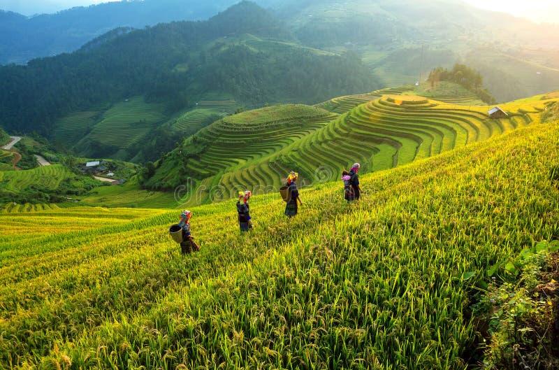 Le riz met en place en terrasse de la MU Cang Chai, Vietnam photographie stock libre de droits