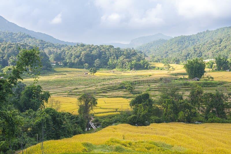 le riz met en place la terrasse sur la montagne photographie stock libre de droits
