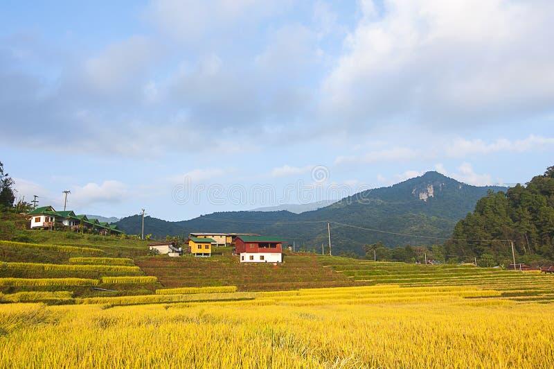 le riz met en place la terrasse sur la montagne image libre de droits