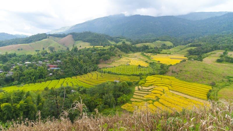 le riz met en place la terrasse sur la montagne, l'AMI chaing, Thaïlande photos libres de droits