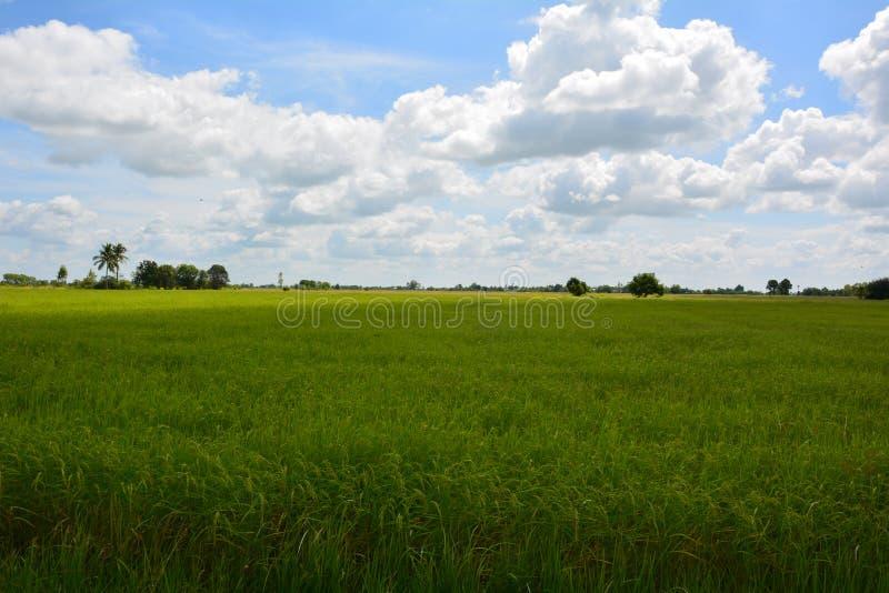Le riz met en place le ciel photos stock