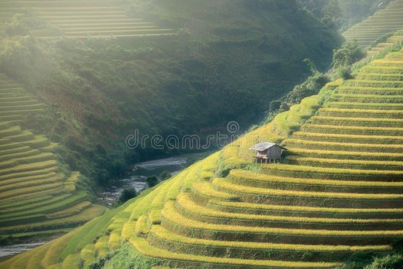 Le riz met en place sur en terrasse de la MU Cang Chai, YenBai, Vietnam Riz f photographie stock