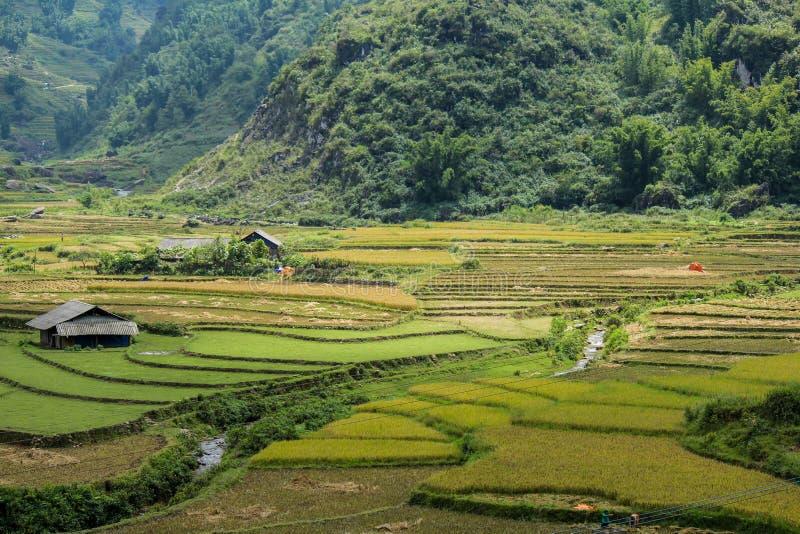 Le riz met en place sur en terrasse de SAPA, Vietnam images stock