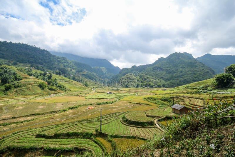 Le riz met en place sur en terrasse de SAPA, Vietnam photographie stock libre de droits