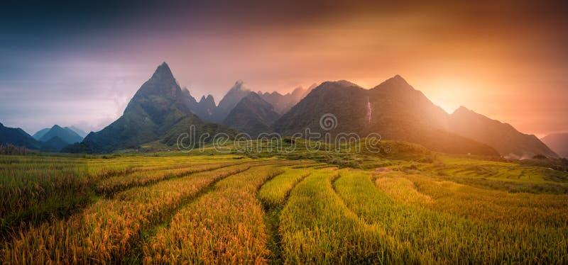 Le riz met en place sur en terrasse avec le fond de Fansipan de bâti au coucher du soleil images stock