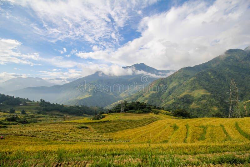 Le riz met en place sur en terrasse de Sapa, secteur de Sapa, Lao Cai Province, Vietnam du nord-ouest photo libre de droits