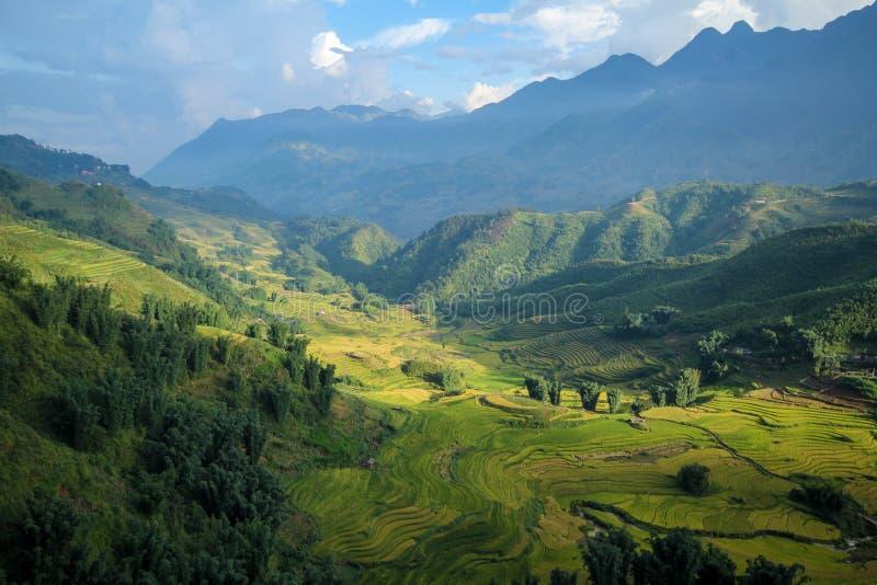 Le riz met en place sur en terrasse de Sapa, secteur de Sapa, Lao Cai Province, Vietnam du nord-ouest image libre de droits