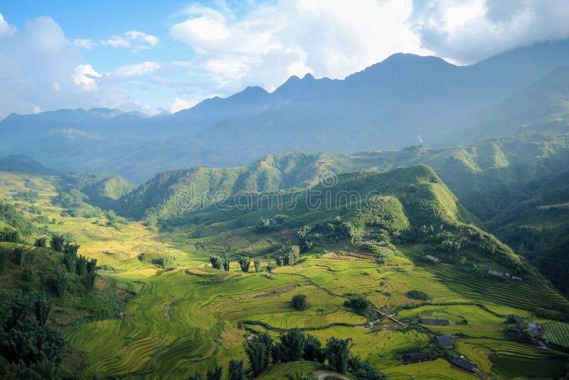 Le riz met en place sur en terrasse de Sapa, secteur de Sapa, Lao Cai Province, Vietnam du nord-ouest photo stock
