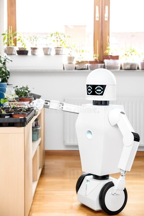 Le robot autonome fait du jardinage à l'intérieur images libres de droits