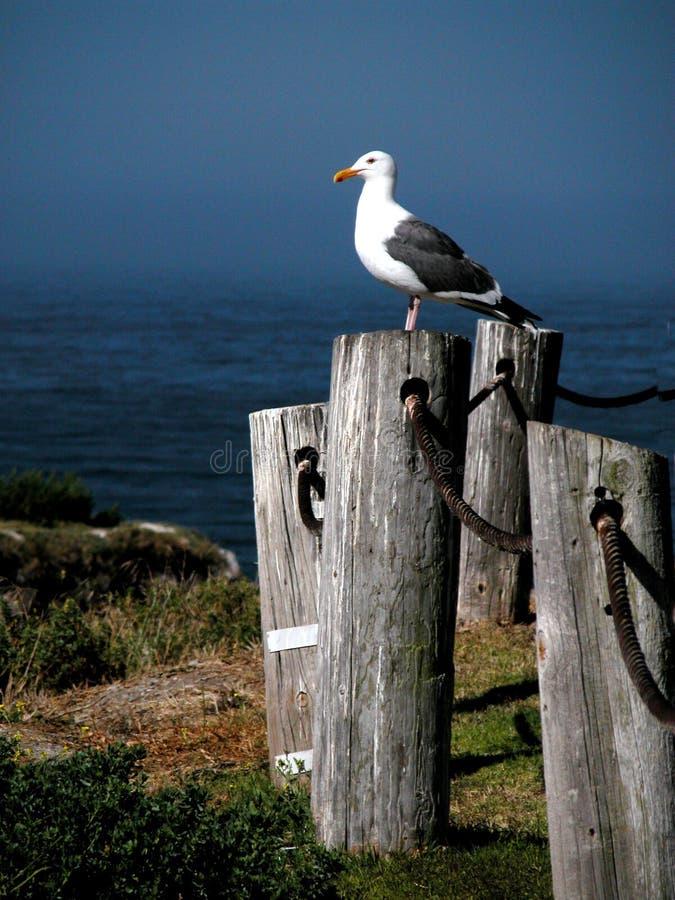 Le Roi Of The Beach images libres de droits