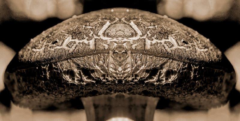 Le roi de champignon illustration de vecteur