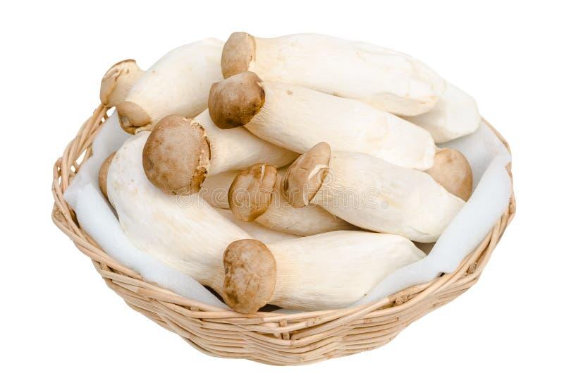 Le Roi Oyster Mushroom d'isolement sur le blanc photo stock