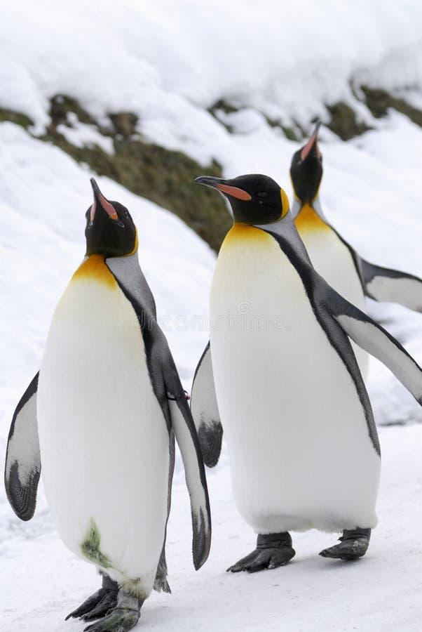 Le Roi pingouin images stock