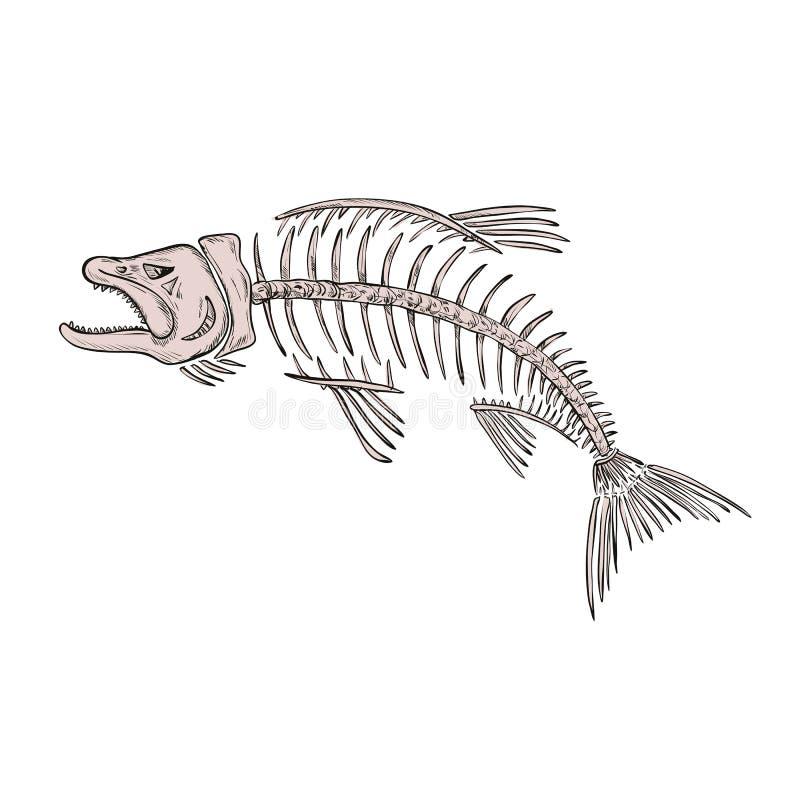 Le Roi Salmon Skeleton Drawing illustration de vecteur