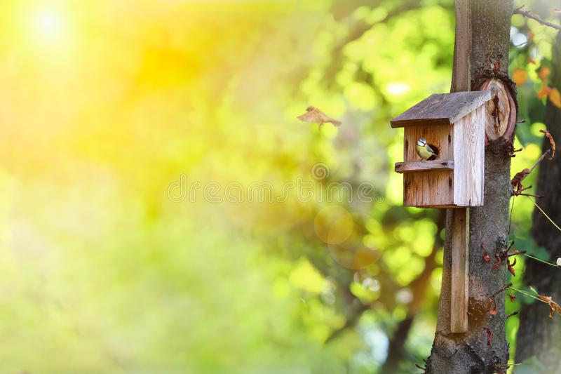 Le roitelet de Chambre sur l'arbre Un roitelet de maison minuscule fait une pause en dehors de sa maison Jour ensoleillé chaud de photo libre de droits