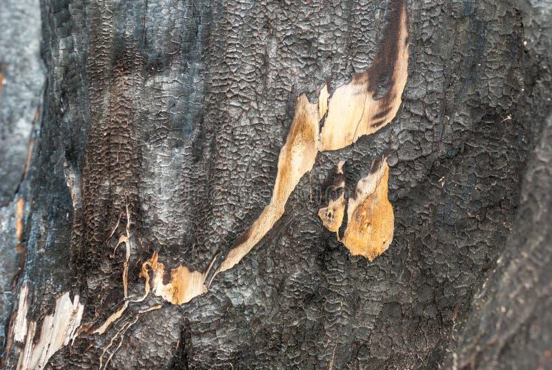 Le rondin en bois carbonisé mur des rondins de pins de maison A brûlé Le fond conceptuel mure le bois de construction Configurati image stock