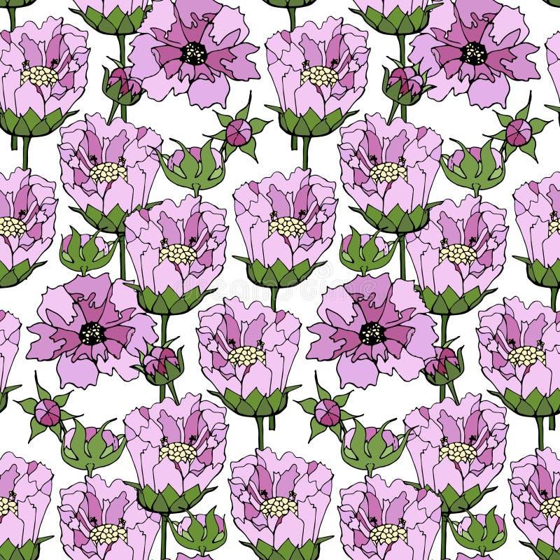 Le rose de cosmos fleurit le modèle sans couture Usine tirée par la main sur l'élément blanc de conception de fond illustration stock