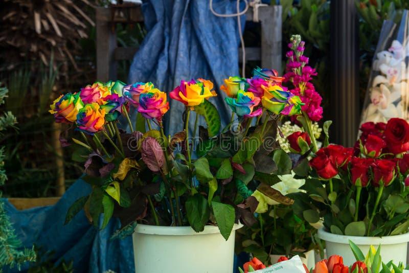 Le rose dell'arcobaleno nel negozio di fiore stanno in un secchio, a Trieste, l'Italia fotografie stock libere da diritti