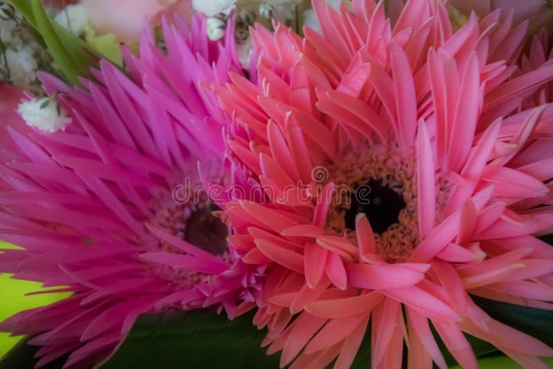 Le rose doux fleurit le fond photographie stock libre de droits