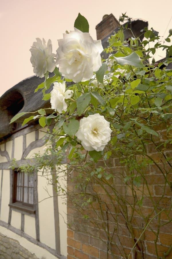 Le rose il cottage thatched che parte esterna yelden yielden il bedfordshi del villaggio fotografia stock