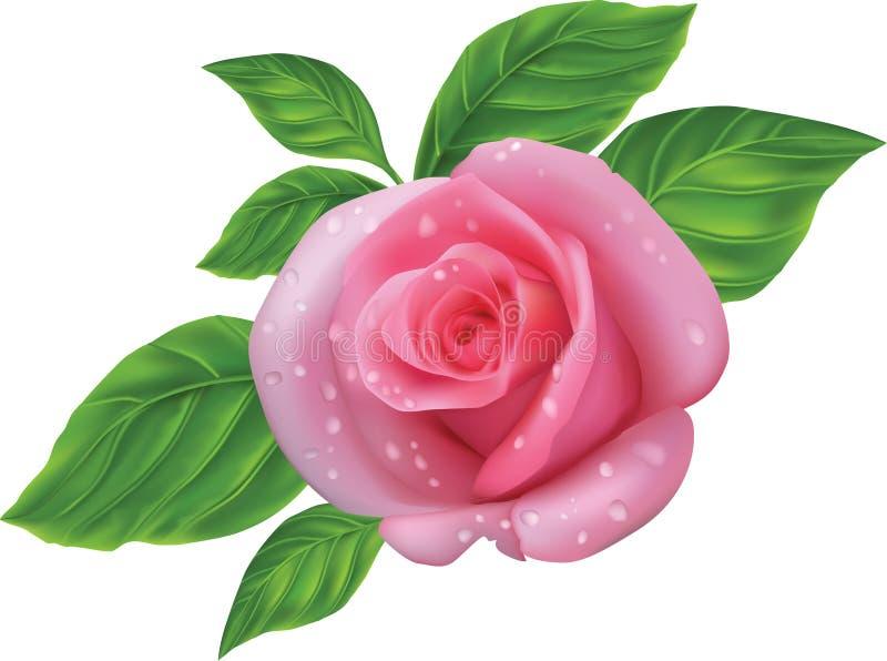 Le rose a monté illustration libre de droits