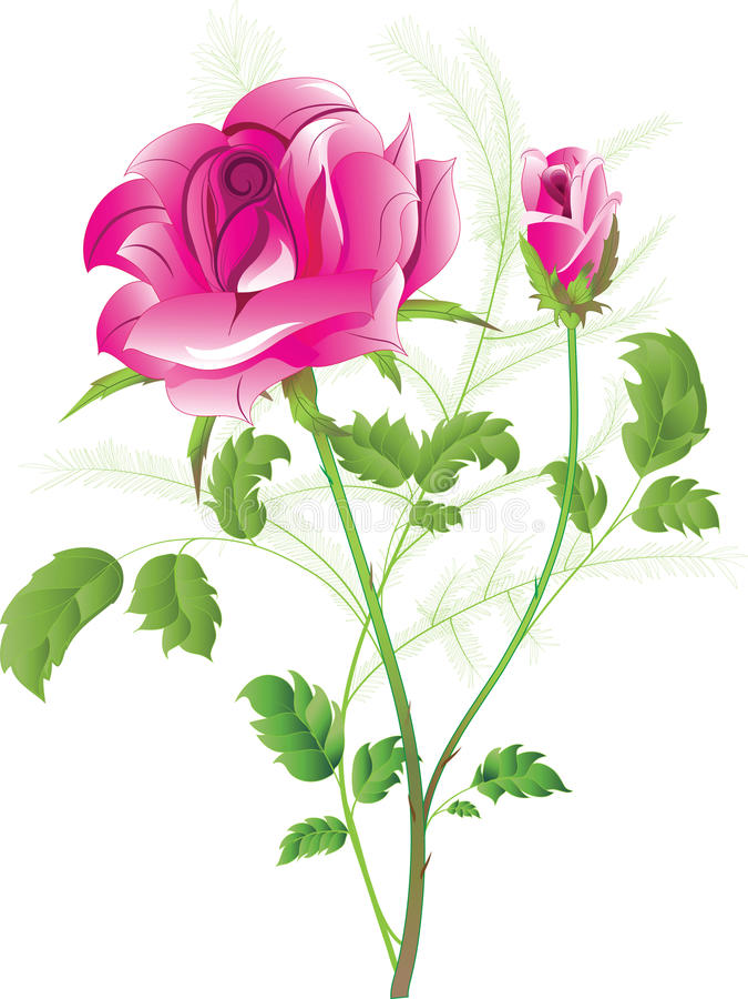 Le rose a monté avec un bourgeon illustration stock