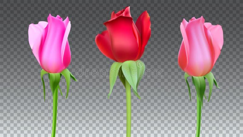 Le rose realistiche germoglia con il gambo e va Primo piano, isolato royalty illustrazione gratis