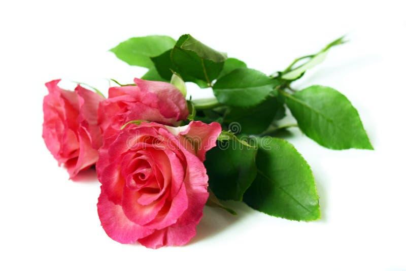 Le rose rosa del mazzo nella goccia inumidiscono su fondo bianco fotografia stock libera da diritti