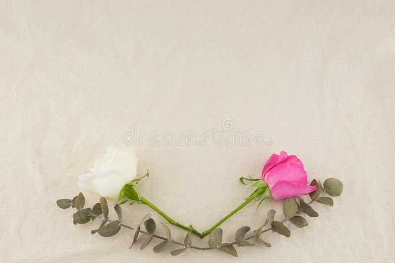 Le rose rosa e bianche e l'eucalyptus asciutto del bambino va immagine stock