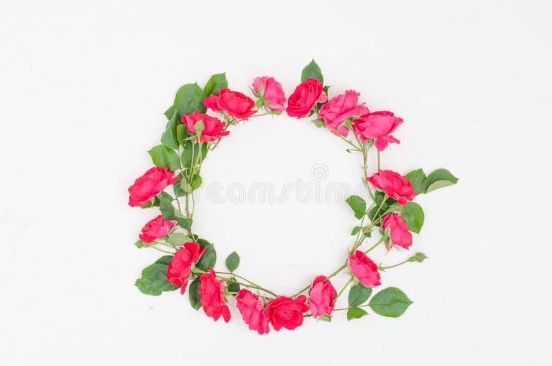 Le rose rosa sono formate in un cerchio su un fondo bianco fotografia stock libera da diritti