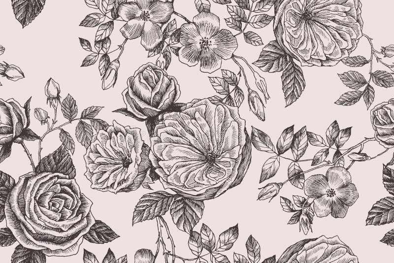 Le rose selvatiche sbocciano modello senza cuciture del ramo Illustrazione disegnata a mano botanica d'annata I fiori della prima illustrazione di stock