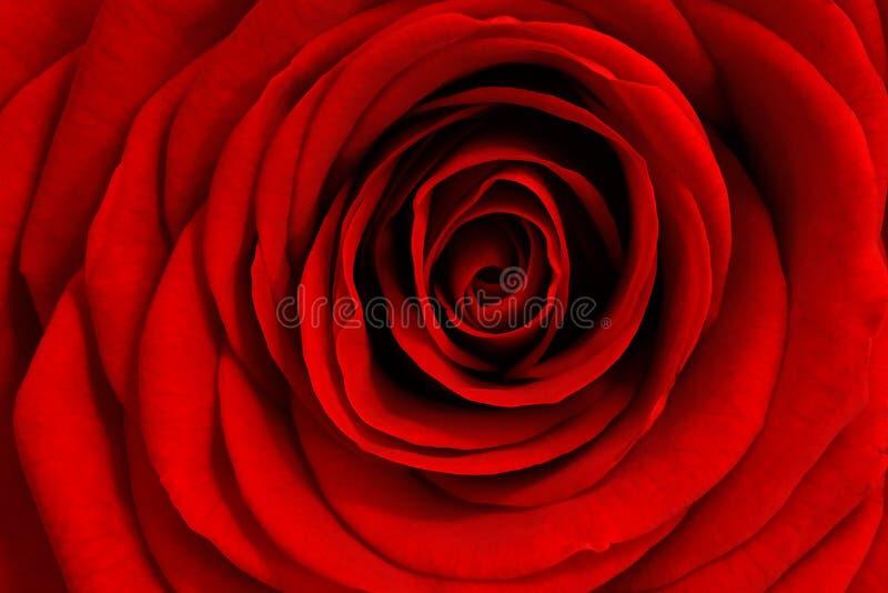Le rose sono rosse? fotografia stock libera da diritti