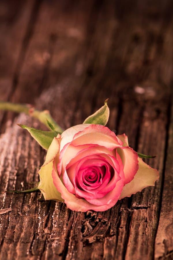 Le rose a teinté le bois antique de Rose And Stem Sits On photographie stock