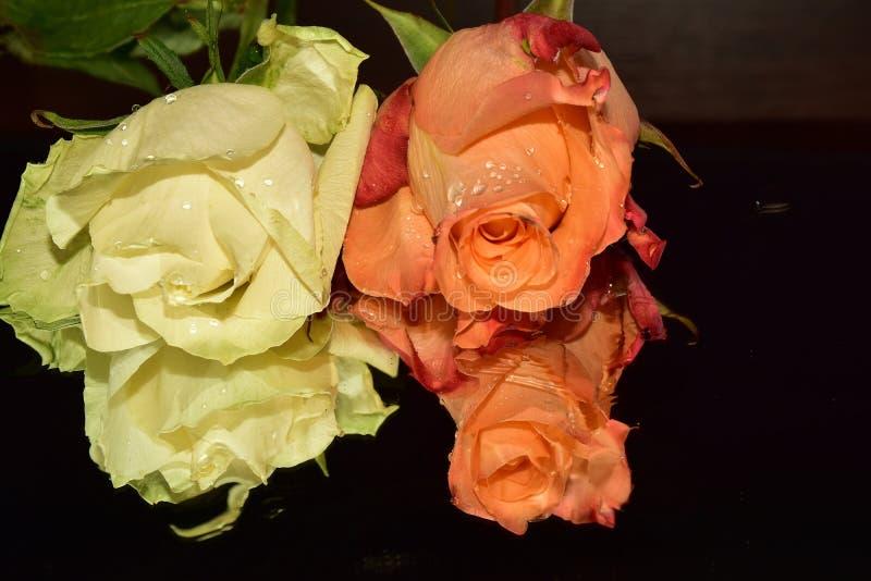 Le rose variopinte piacevoli si chiudono su immagini stock